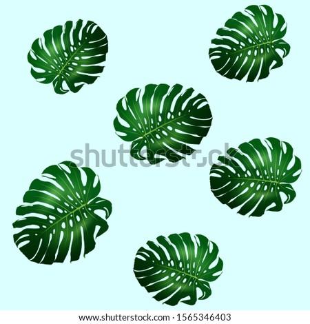Seamless pattern of beautiful big green leaves Monstera plant, Monstera on blue background, illustration