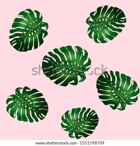 Seamless pattern of beautiful big green leaves Monstera plant, Monstera on pink background, illustration