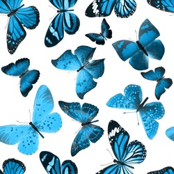 seamless pattern of blue butterflies isolated on white background