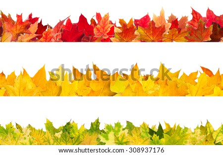 Seamless pattern of colored autumn maple leaves, isolated on white background.