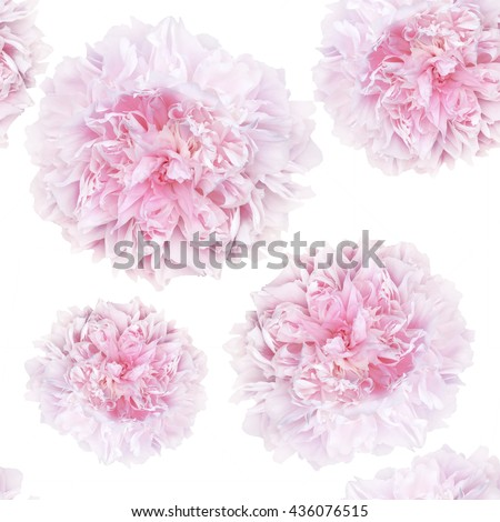 seamless pattern of pale pink peonies luxury fresh various sizes on a white background #436076515