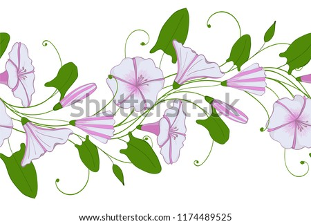 Seamless pattern of white and pink convolvulus. Garland with bindweed flowers. Morning-glory tender ornament