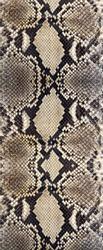 Seamless snake skin texture. Fashion for tropical reptiles. Genuine Python skin. Black grey background.