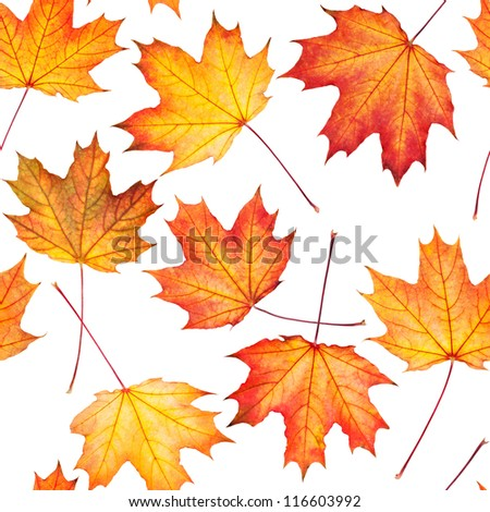 Seamless texture with maple leaves
