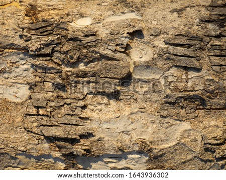 Seamless tree bark background, Brown tileable texture