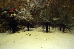 seaquarium crayfish wather ocean dweller