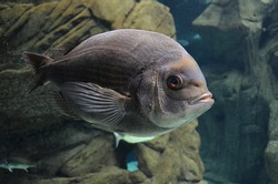 seaquarium wather fish sea natural