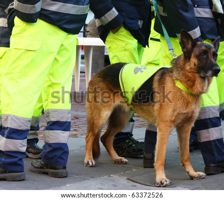 Search and Rescue German Shepherd