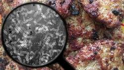 Searching for bacteria in meat