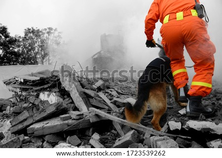 Searching through a destroyed building with the help of rescue dogs.