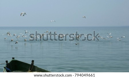Seascape. Blue sea water, flying flock of gulls, European herring gull, Larus argentatus, over the water surface, hunting for fish. Part of fishing boat in the foreground.  #794049661