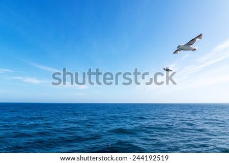 Seascape. Blue sky and white cloud. Calm sea. The Northern sea bird.