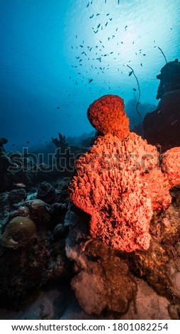 Seascape in turquoise water of coral reef in Caribbean Sea / Curacao with fish, coral and big sponge Сток-фото ©