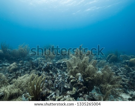 Seascape of coral reef in the Caribbean Sea around Curacao at dive site Watamula with various corals and sponges #1335265004