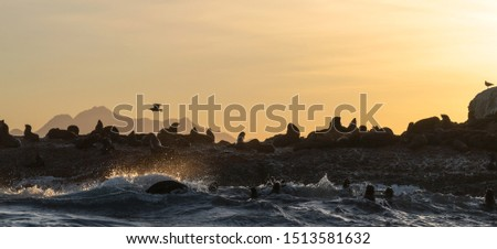 Seascape of storm morning. The colony of seals on the rocky island in the ocean. Waves breaking in spray on a stone island.  Mossel bay. South Africa