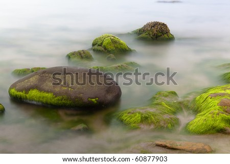 seascape seaweed on boulder of rocky shore long exposure gives smooth milky sea
