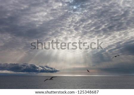 Seascape, the sun shining through the clouds and flying gulls