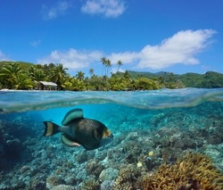 Seascape tropical coast and coral reef with titan triggerfish underwater, split view over and under water surface, French Polynesia, Pacific ocean, Oceania