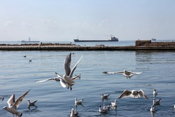 Seascape View of Izmir City with Group of Seagulls and Ships Aegean Sea Turkey