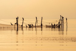Seascape view with Cormorant birds sitting at fishing nets poles at sea