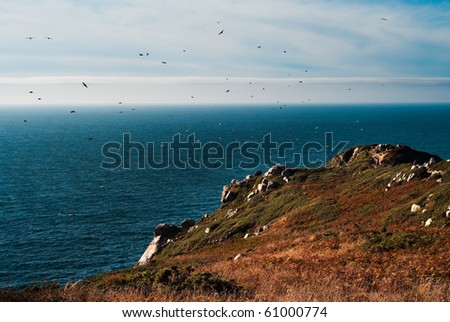 Seascape with a lot of birds flying.