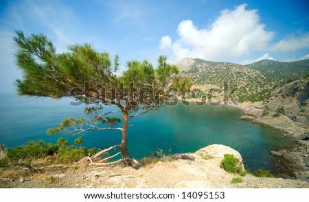 seascape with a pine tree