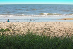 Seascape with green grass forground and the beach background