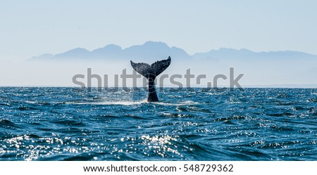 seascape with whale tail. the...