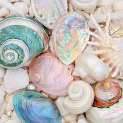Seashell abstract background with mother of pearl seashells and a variety of shells. Flat lay.