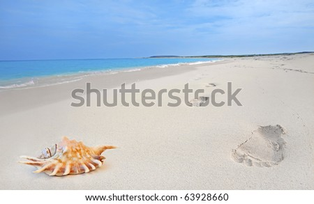 Seashell and footprints in the sand on Boca Grandi beach, Aruba
