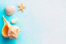 Seashell and starfish with summer mood