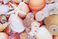 Seashell background, lots of amazing sea shells with coral and starfish piled together