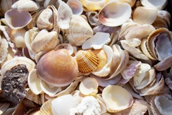 Seashell background, many different seashells together