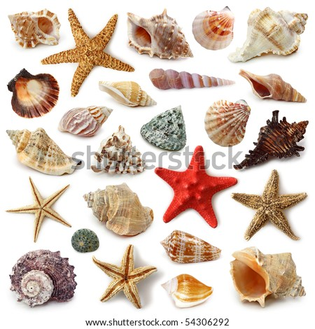 Seashell collection isolated on white background