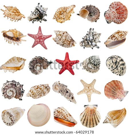 Seashell collection set  isolated on white background