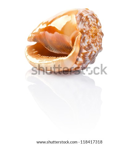 Seashell. File contains a path to cut.