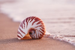 seashell nautilus on sea beach under sunset sun light, Canary island, Spain