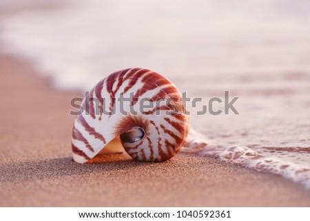 seashell nautilus on sea beach under sunset sun light, Canary island, Spain Stockfoto ©