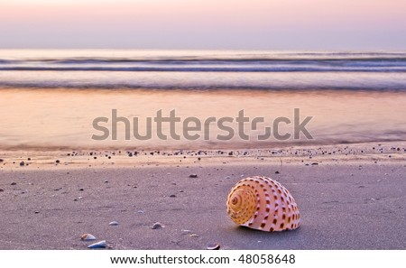seashell on a beach in morning light