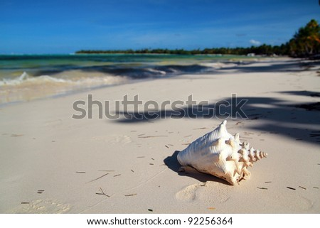 Seashell on a caribbean sea beach