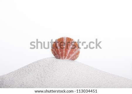 Seashell on a sand hill