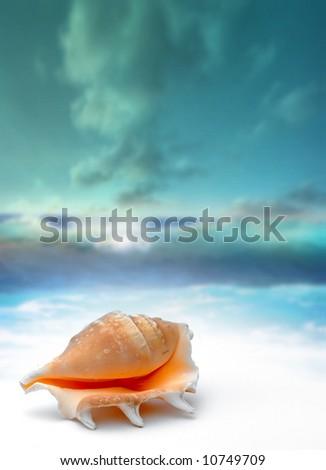 seashell on beach - water reflection