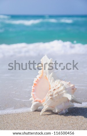 seashell on clean sandy beach against blue sea background