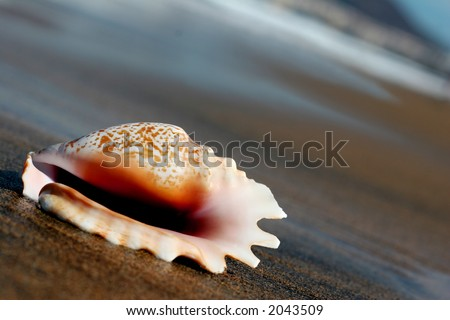 Seashell on the seashore at the waterside