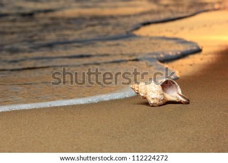seashell on the summer beach...