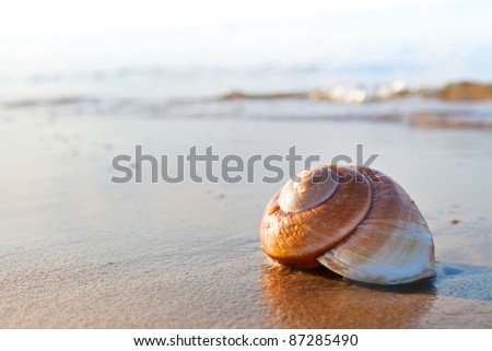 Seashell on the summer beach next to the sea, nature concept - stock photo