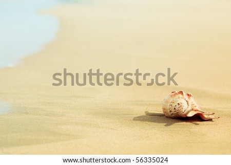 Seashell on the tropical beach close to water #56335024