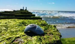Seashell resting on an old dock