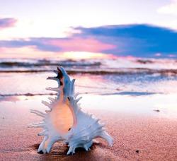 Seashell Sand Dusk