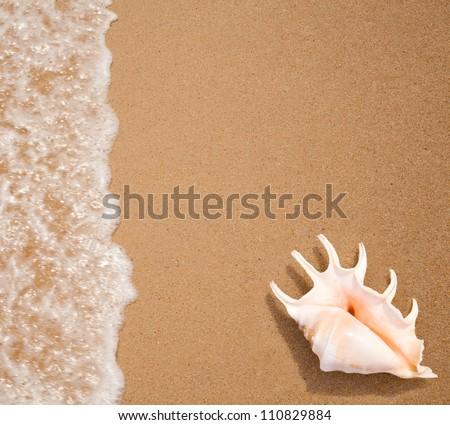 seashell top view on sea surf edge